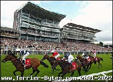 Win a trip for two to York races